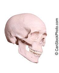 spooky cranium