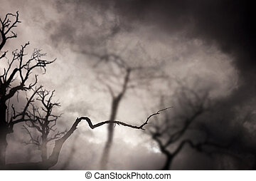 Spooky dark forest with dead trees at night.