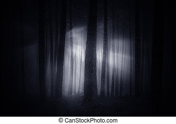 Spooky foggy forest