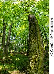 spooky, forêt arbre