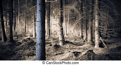 spooky, forêt