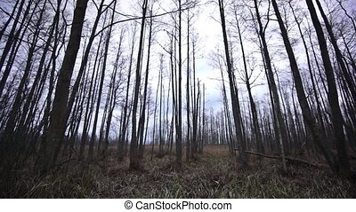 Spooky forest in late autumn