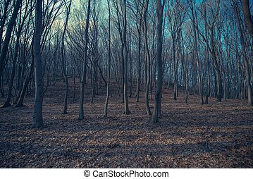 Spooky Forest Landscape