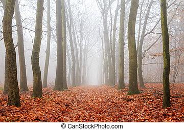 Spooky lane in autumn