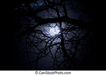 Spooky moonlight shining through a web of branches