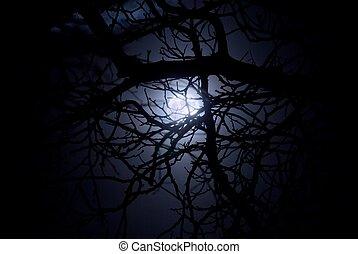 Spooky midnight moonlight - Spooky moonlight shining through...