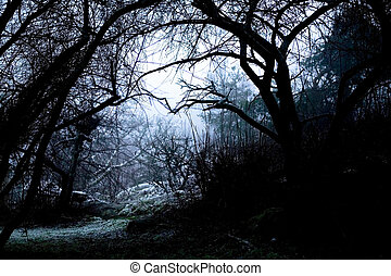 Spooky Path in Fog - A spooky path overshadowed bya group of...