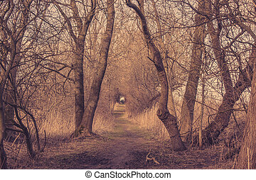 Spooky trail in a forest