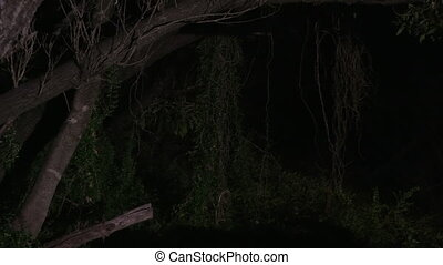 Spooky trees and plants - A spooky medium shot of trees and...