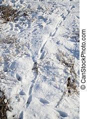 spoor in the snow
