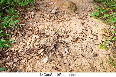 sporcizia, termiti, giungla, percorso, incrocio, roccioso