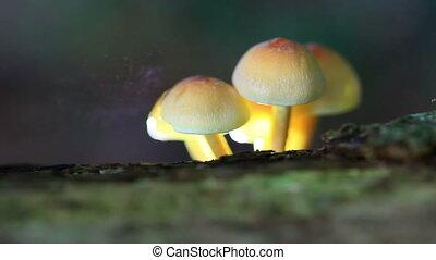 spores, грибковый