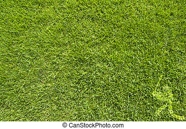Sport baseball on green grass texture and background