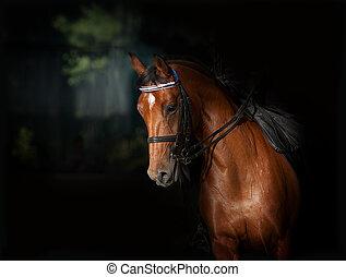 sport, dressage, cavallo, in, scuro, manege