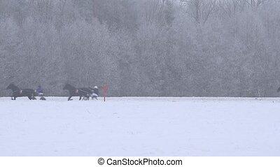 sport horse race contest on winter day in stadium. 4K