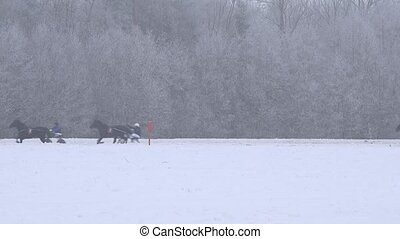 sport horse race contest on winter day in stadium. 4K -...