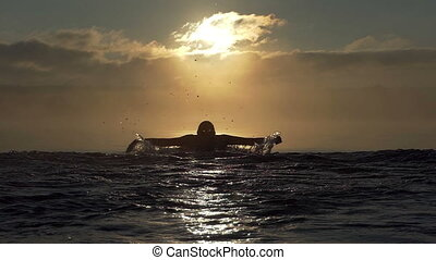 Sportive man swims butterfly in a lake at sunset in slo-mo