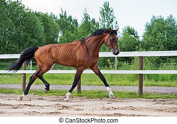 sportive, paddock, paarde, trotting