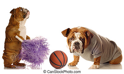 sports fans - english bulldog cheerleader and basketball...
