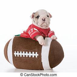 sports hound - bulldog puppy inside a football