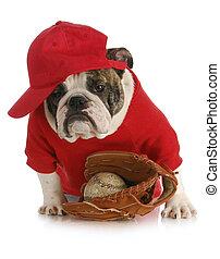 sports hound - english bulldog wearing red shirt and hat ...