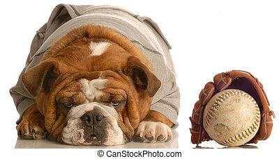 english bulldog wearing sweatsuit with baseball glove