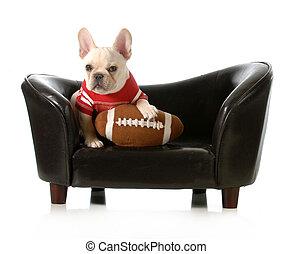 sports hound - french bulldog with stuffed football sitting...
