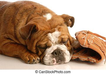 sports hound - english bulldog sleeping with baseball and...