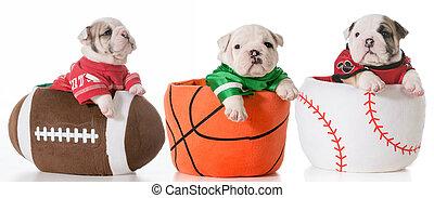 sports, traque