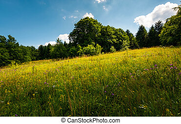 spot of light on a meadow among forest. gorgeous nature...