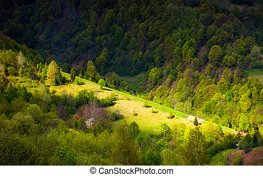 spot of light on forested hillside. lovely nature background...