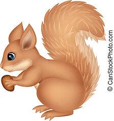 spotprent, squirrel, vasthouden, noot