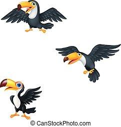 spotprent, toucan, verzameling, set