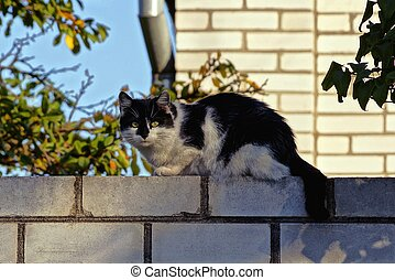 spotted cat sits on a brick fence