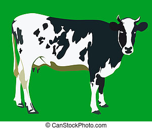 spotted cow on a green background