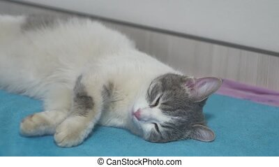 spotted gray cat asleep on the bed close-up of a indoors pet...