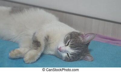 spotted gray cat asleep on the bed close-up of indoors a pet...