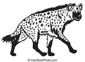 spotted hyena black white - spotted hyena , side view black...