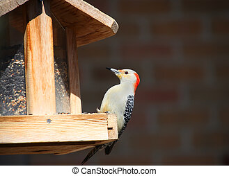 Spotted Wood pecker