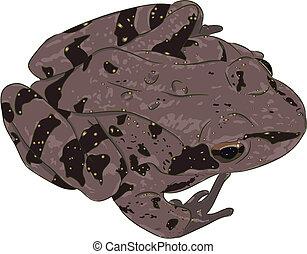 Spotty frog - The beautiful spotty brown frog (amphibian)...
