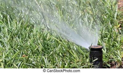 sprühen, bewässerung, kleingarten