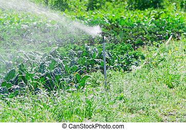 Spray irrigation working during daytime at organic kale farm in Washington, America