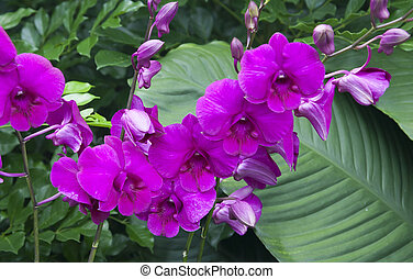 Spray of Beautiful Purple Orchids