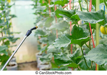 spray the Insecticide to Vegetable in farm