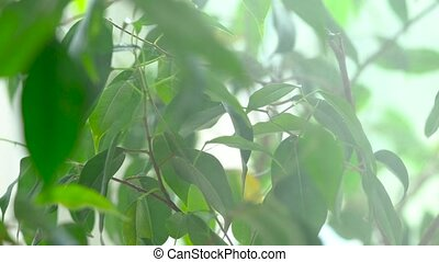 Sprayed water is falling on the leaves of a green plant. ...