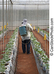 Sprayer spray fertiliser on plants - Sprayer spray...