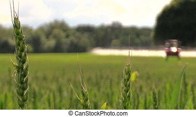 sprayer tractor crop - village tractor spraying green crop...