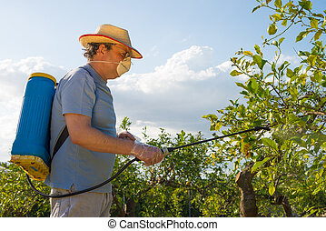 Spraying a citrus plantation - Agricultural worker in a ...