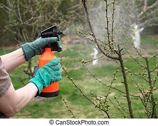 Spraying plants with a sprayer