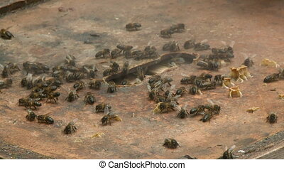 Handheld, close up shot of bees on a boxed hive, smoke is being sprayed on the bees.